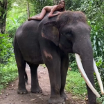 VIDEO: Russian Insta star who received backlash after posing nude atop an elephant says she's 'sorry'
