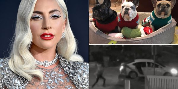 Lady Gaga's alleged dognappers and woman who 'found' them arrested on attempted murder and robbery charges.