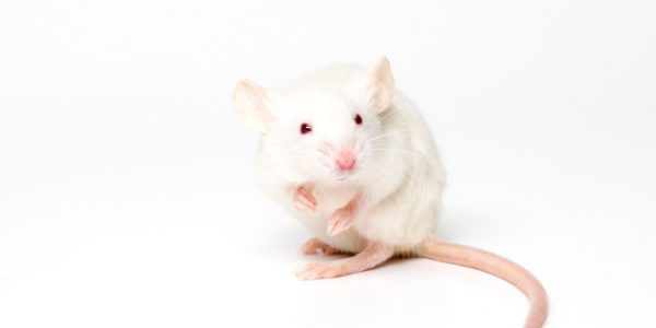 Scientists develop procedure allowing lab animals to 'breathe' from their rectum